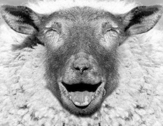 Doit-on valider notre statut de mouton?
