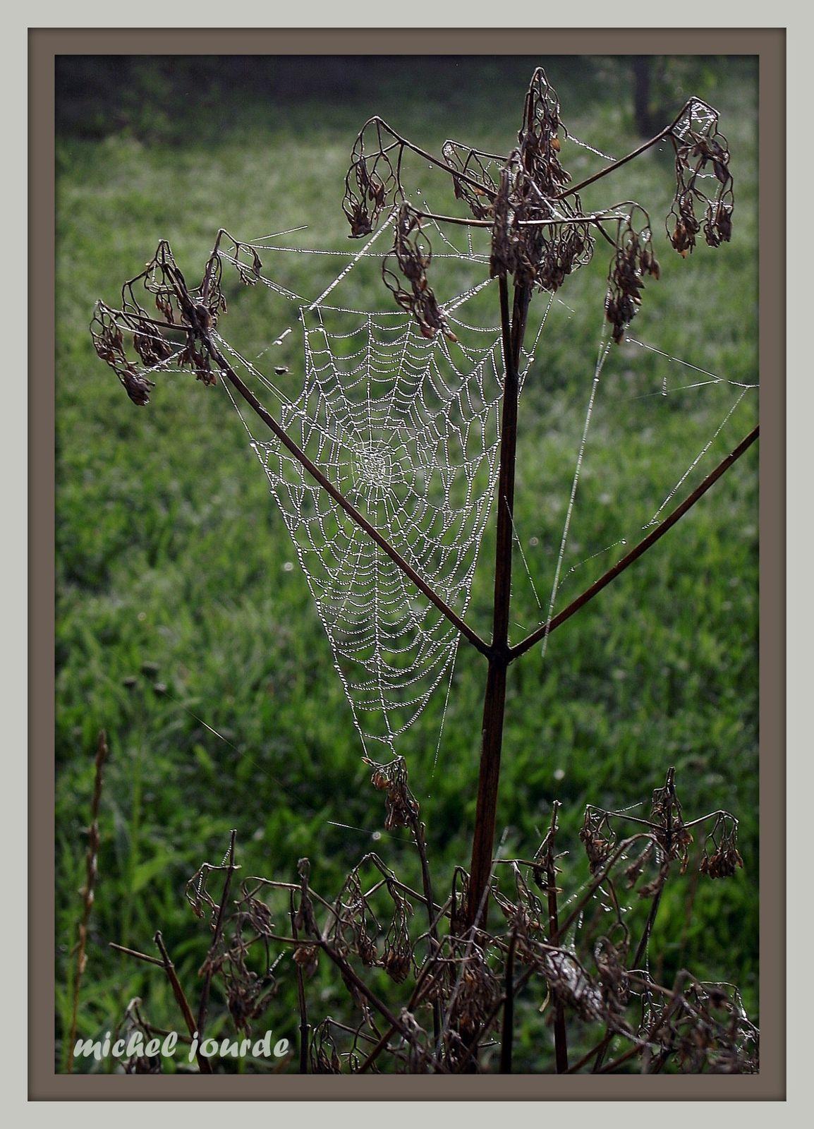 Tissu Arachnéen