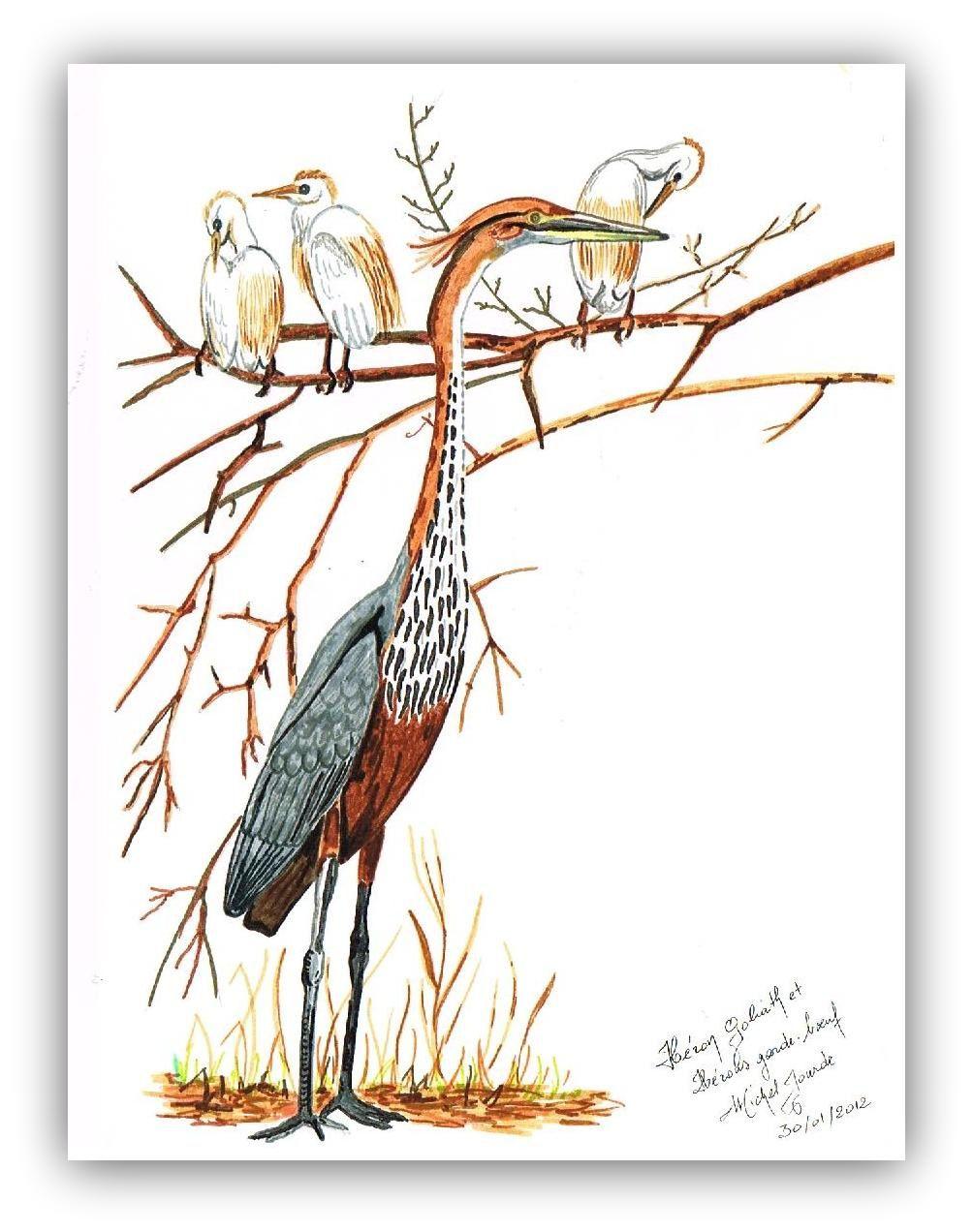 &quot&#x3B;Diversion sur les Oiseaux&quot&#x3B;