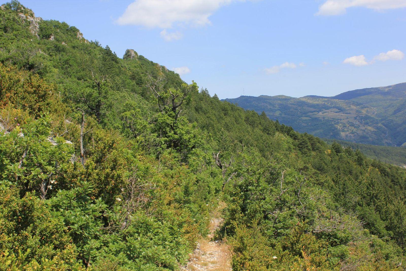 1) Rimon vu des Pas des Blaches  2) Pennes le Sec ? ah oui ça fait loin...  3) Le chemin qui redescend sur Pennes  4) Le panorama au sud du pas  5) Les Blaches vus de la route du Col de Pennes.