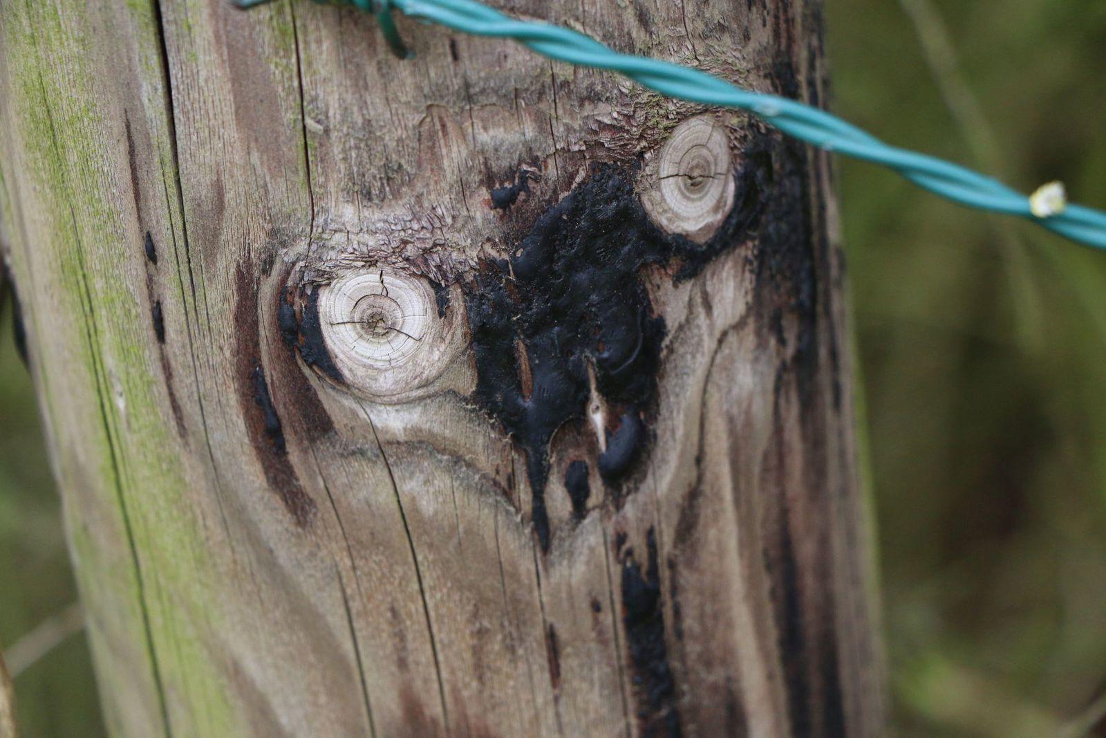 Si vous voyez autre chose qu'un piquet en bois...