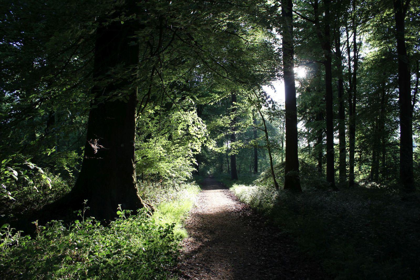La forêt s'endort.