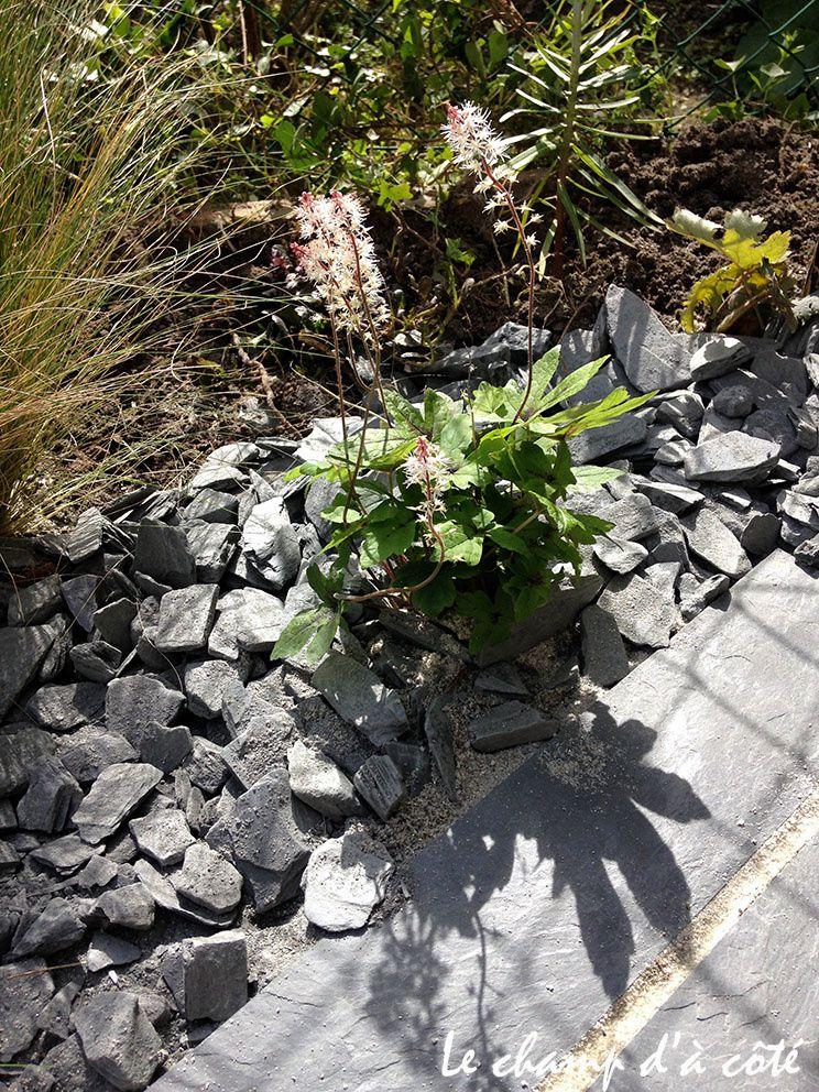 Délicates floraisons