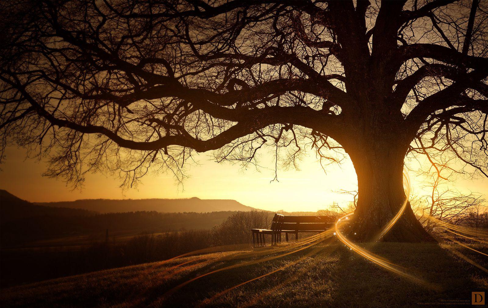 QI GONG : On fait l'arbre ?