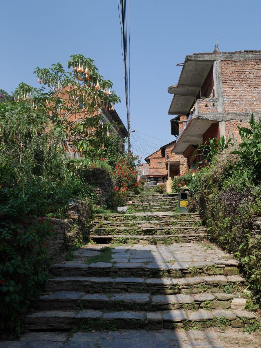 Glandouille à Bandipur