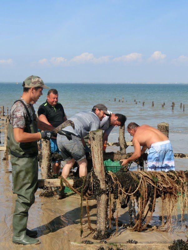 """Les """"travailleurs de la mer"""""""