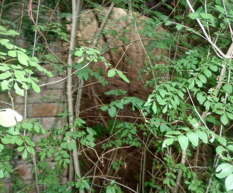 grottes, pont de chemin de fer !
