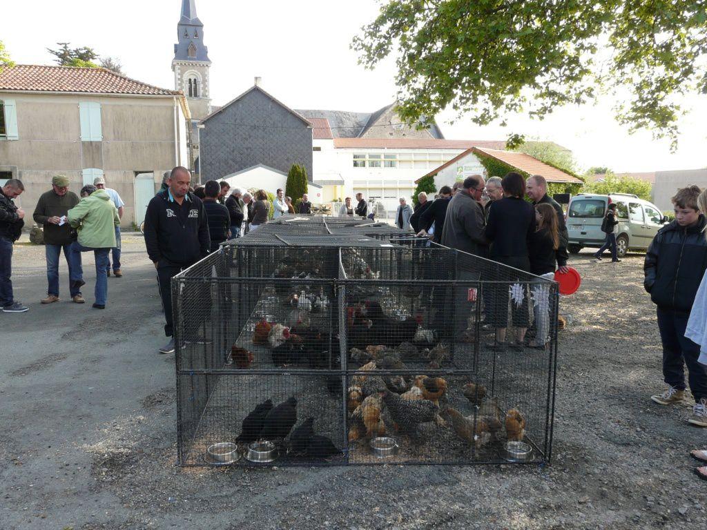Rappel : bourse aux oeufs, aux poussins et volailles