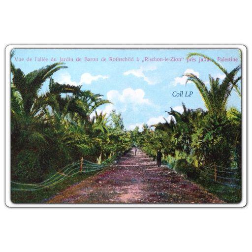 Carte 41:  vue de l'allée du jardin du Baron de Rothschild à Rischon-le-Zion près Jaffa