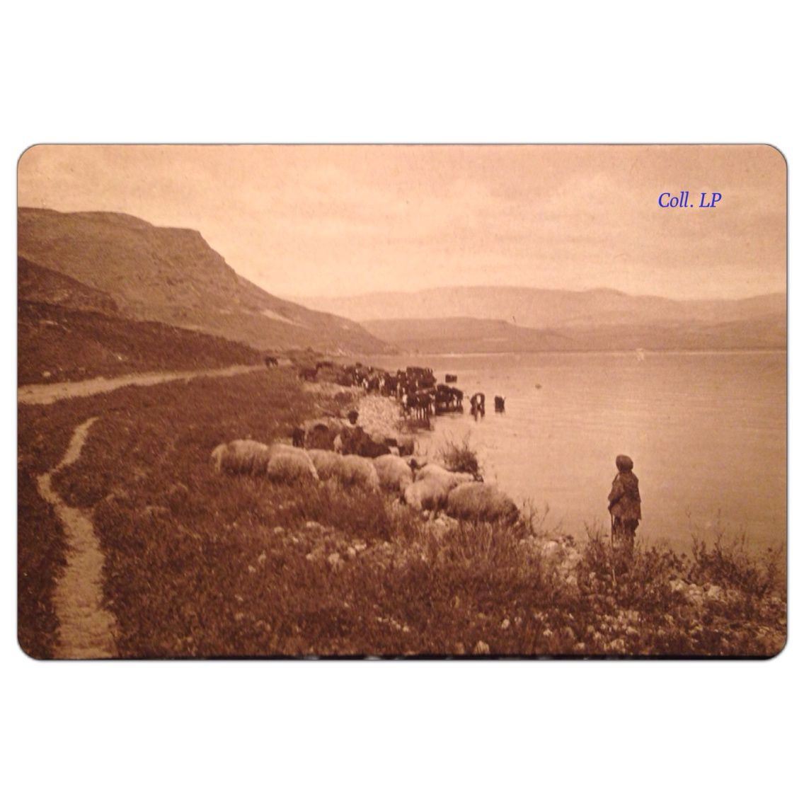 Israël 1921. Photo de Narinsky. Cp 19 à 36