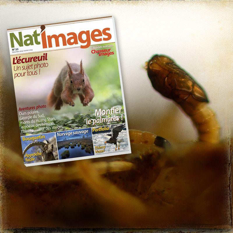 Nat'images, le mag qui aime aussi les noisettes...