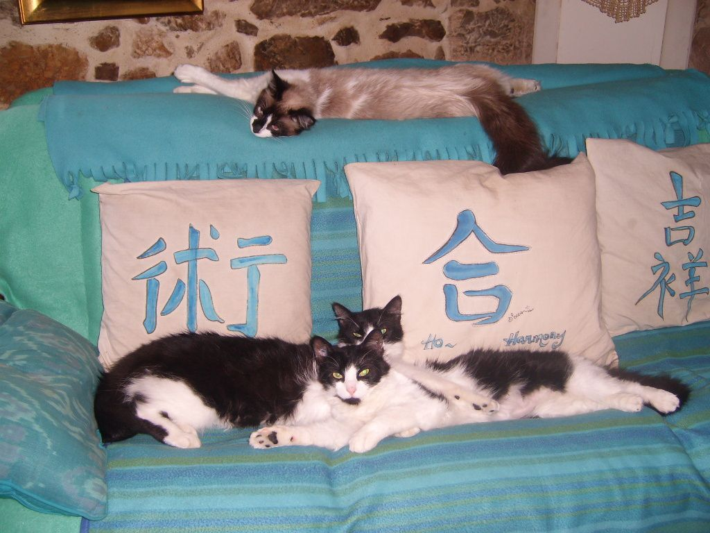 les coussins que j'ai peints suivant le Feng Shui sont bien mis en valeur avec les top models chats.. / * the cushions I painted according to Feng Shui are valorized with the cats top models...