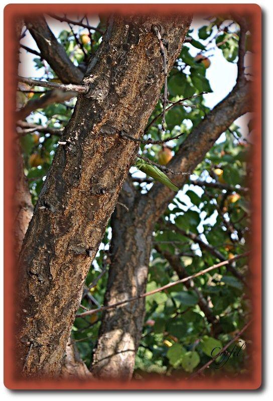 La mante religieuse dans l'arbre.