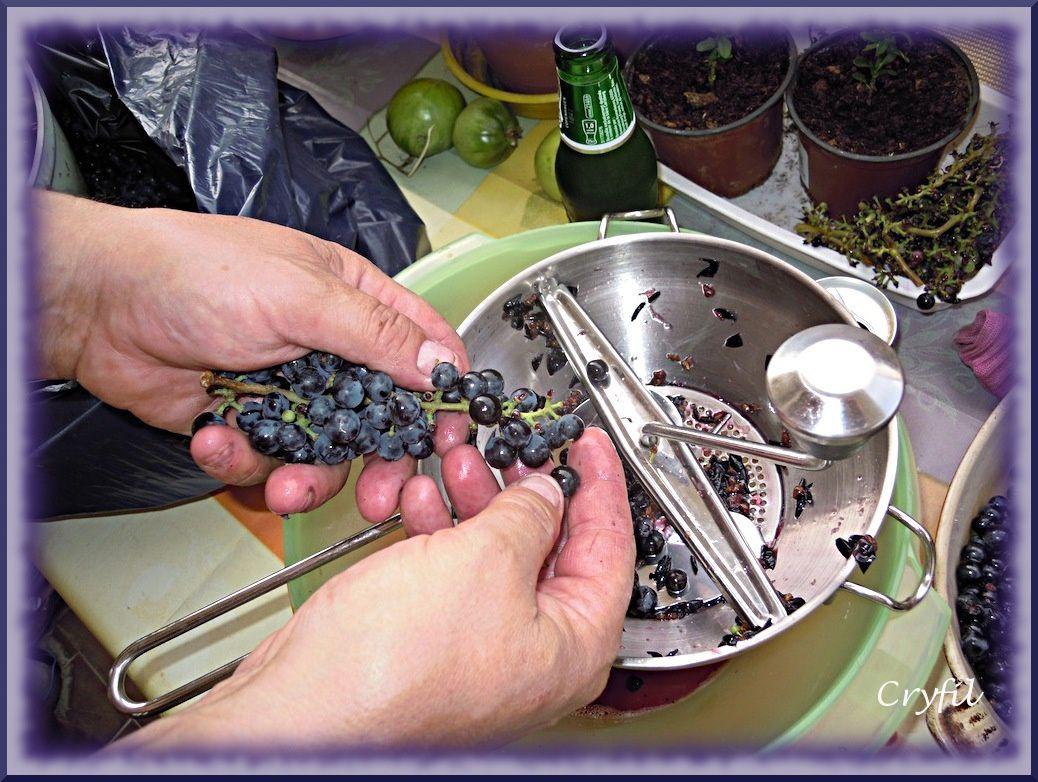 On égraine le raisin.
