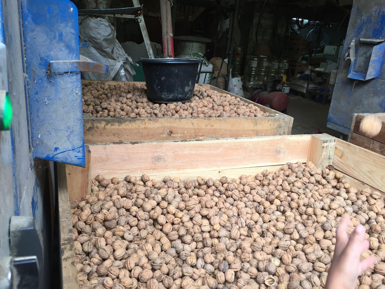 Chantier de ramassage de pommes et noix chez Jules