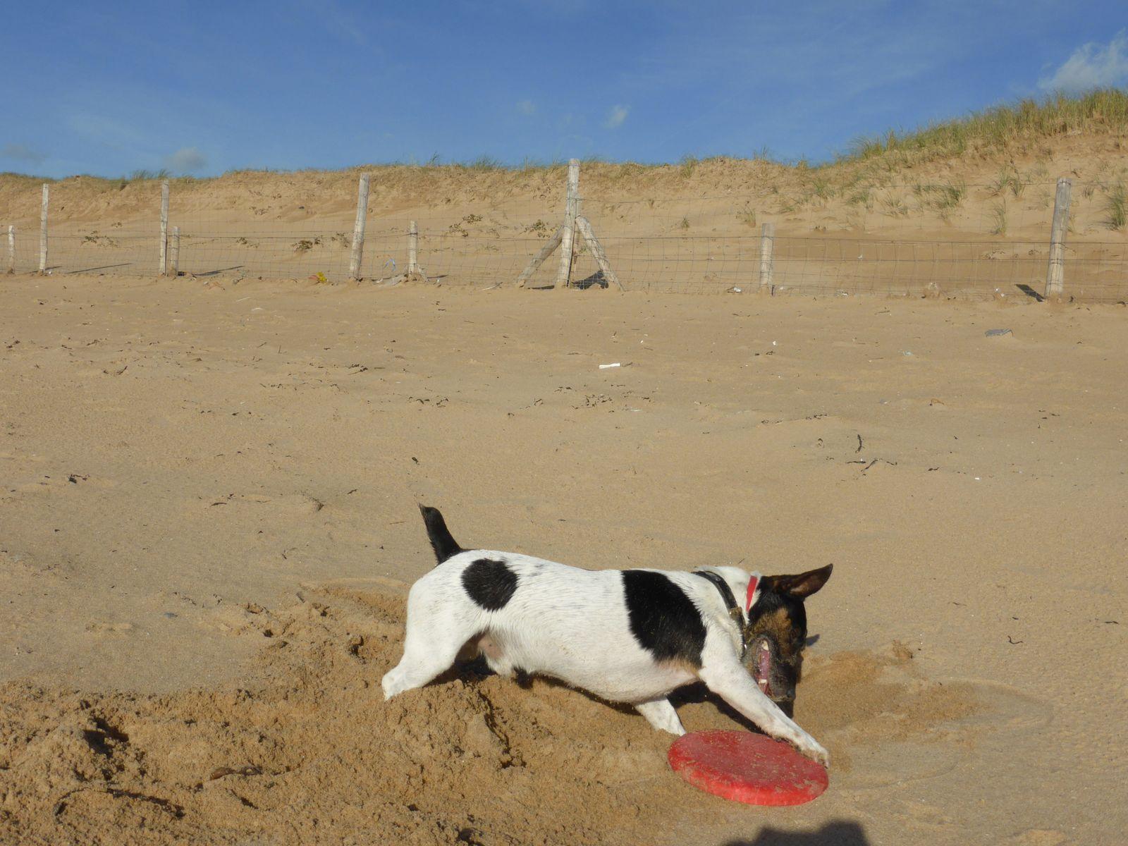 Domino et son frisbee .............