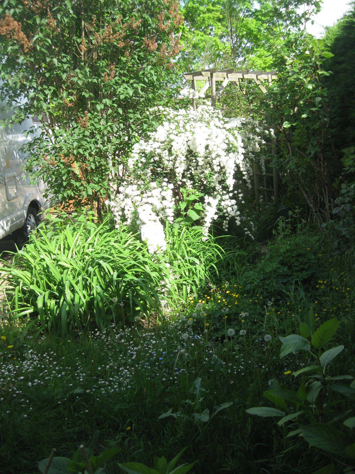 Mon jardin ... du boulot !!!!