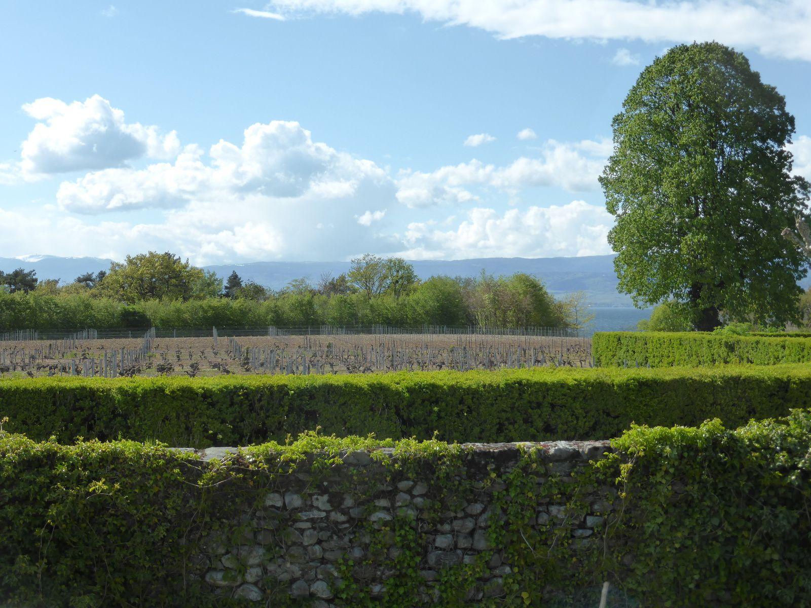 """Mes visites autour du Lac Léman .... """"Le château de Ripaille"""""""