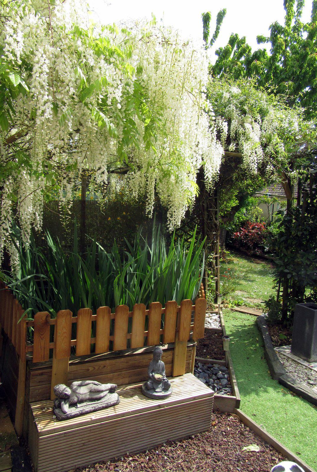 Un peu de mon jardin ...