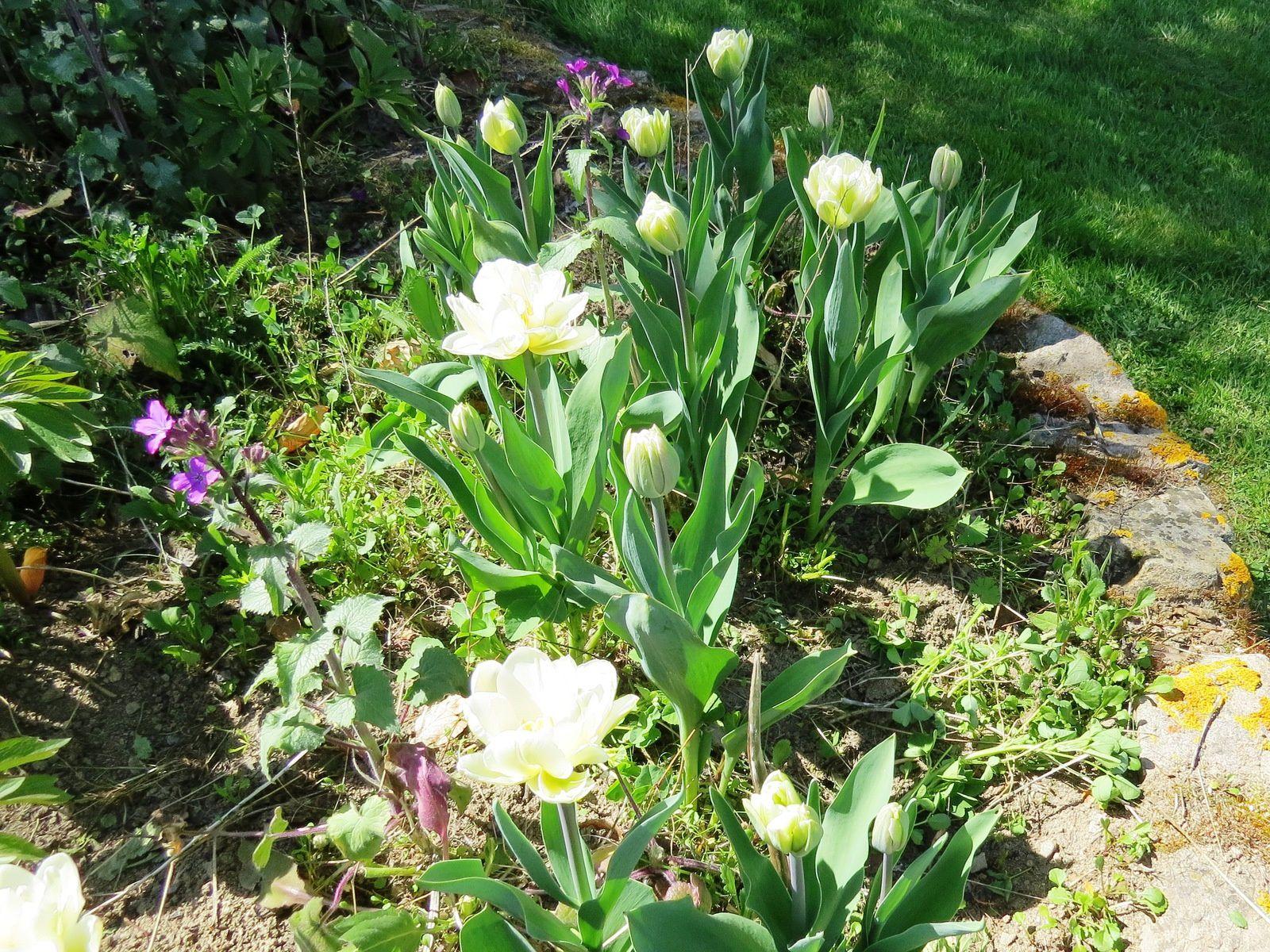 Tulipes le jardin de - Horaire vive le jardin bernay ...