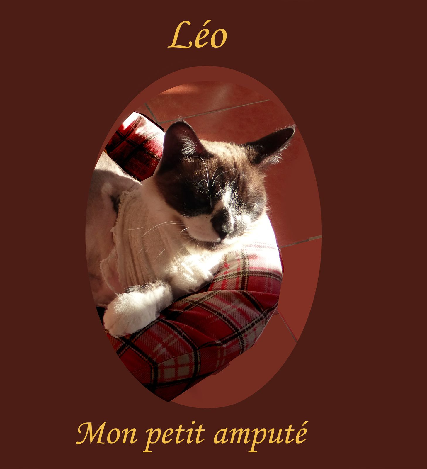 Léo, mon chat, m'interroge