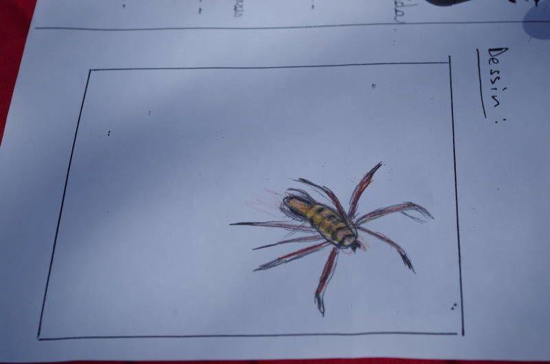 chasse aux insectes et exposition de dessins.