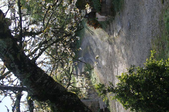 Les Grellières au matin, le 13 avril 2016