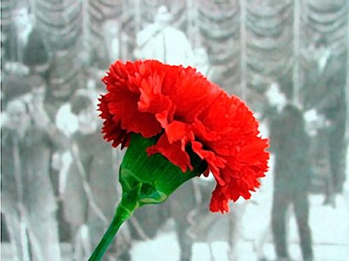Dès avant cette date, l'oeillet rouge était la fleur préférée de La Canaille, cette date a renforcée ce choix