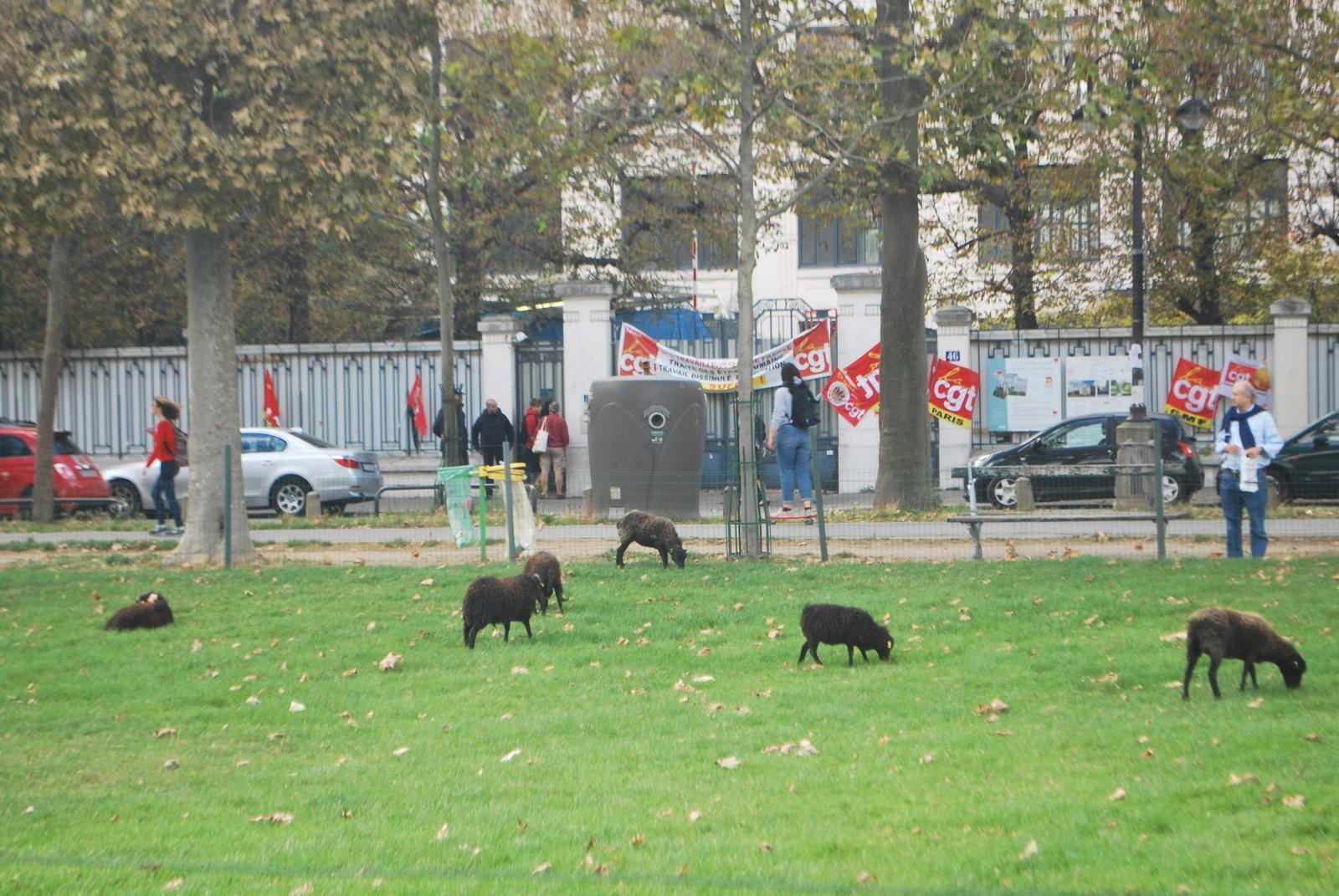 Paris mutuelles, Paris la honte