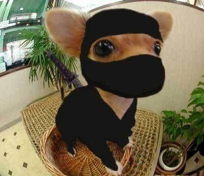 Mon top 10 des déguisements d'Halloween pour les animaux