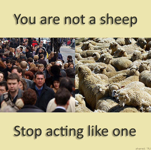 You are not a sheep !