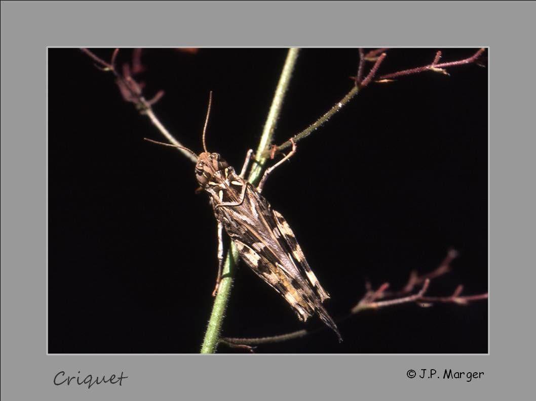 Les insectes au Devois