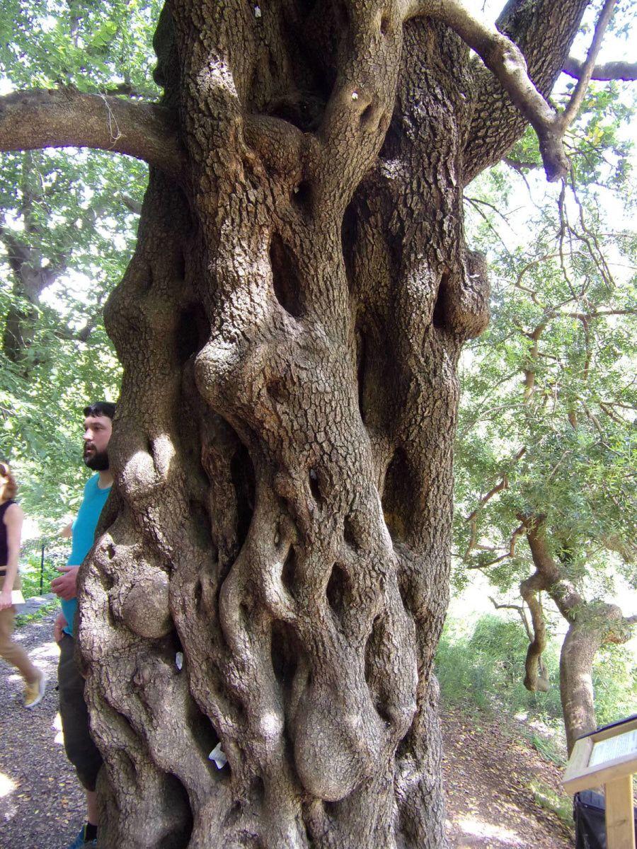 Visite du jardin des plantes de Montpellier - samedi 13 mai