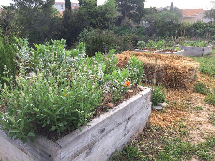 Atelier dans le jardin partagé : l'agriculture urbaine au Devois