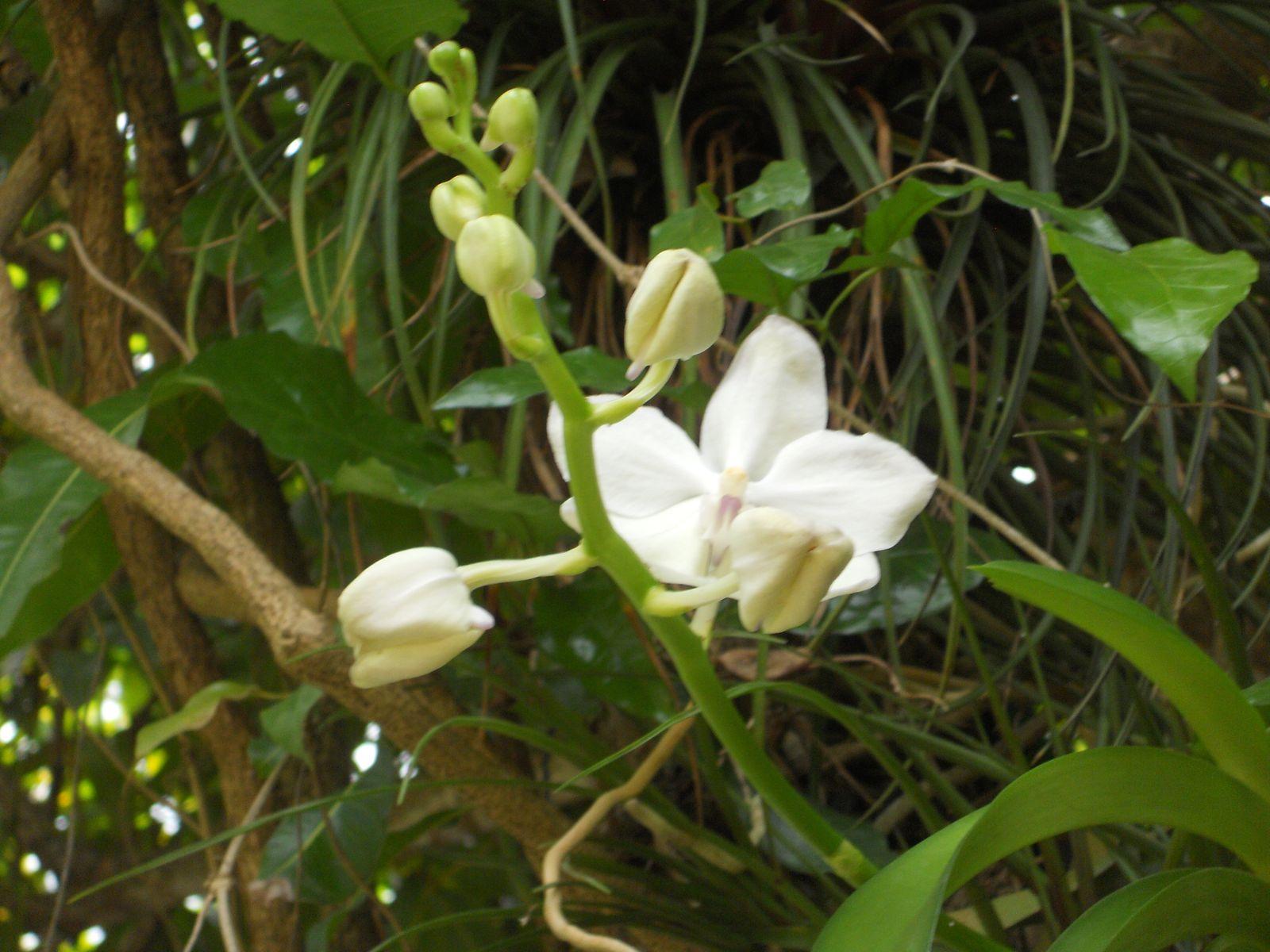 4 ao t Jardin botanique de Deshaies lesubou enadeloupe