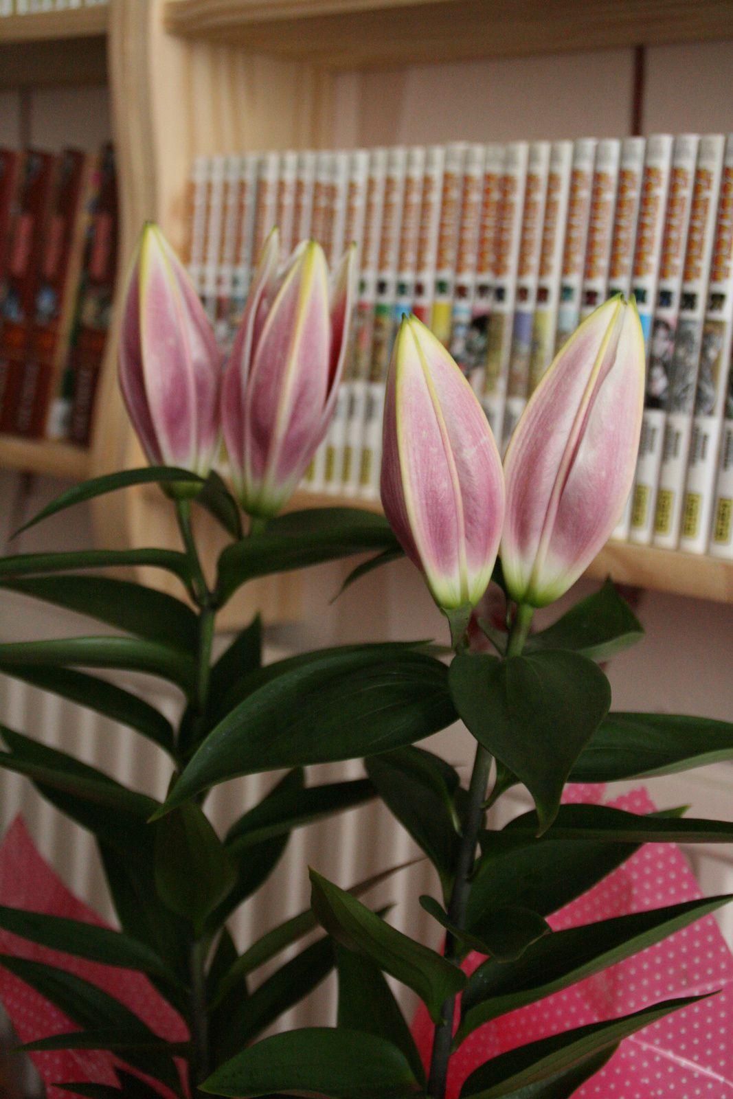 comment rendre les fleurs éternelles