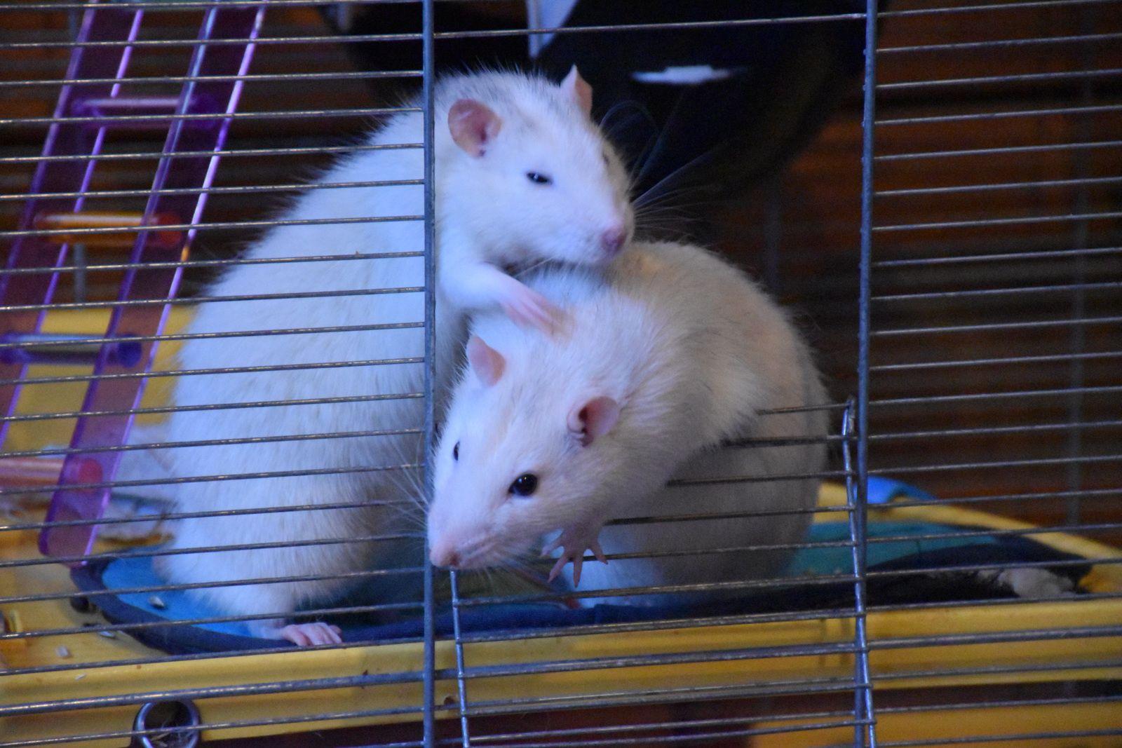 Toutous, Chat et petits rats (shooting photo)