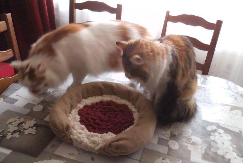 J'ai fait un coussin pour les chats de Laramicelle