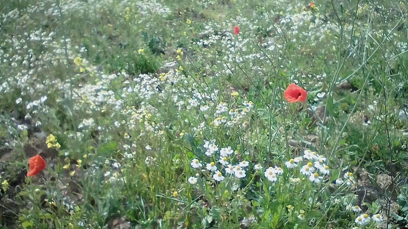 la vie sauvage reprend ses droits: un champ dans la ville à Boulogne sur mer