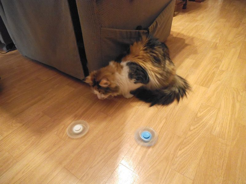 chats jouent au Hand Spinner