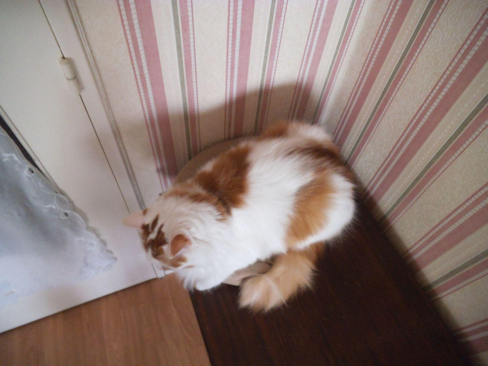 chat déborde