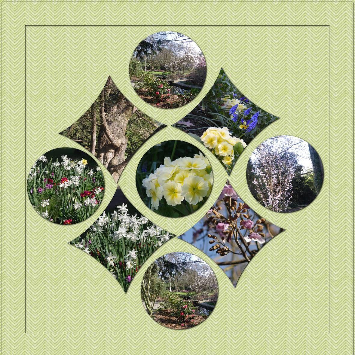 au jardin botanique - arbres et fleurs