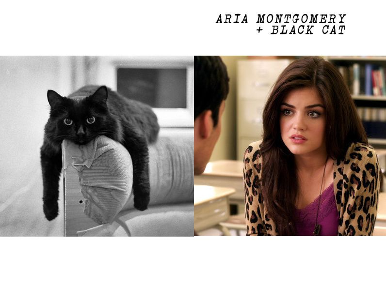 If the Pretty Little Liars had Cats...