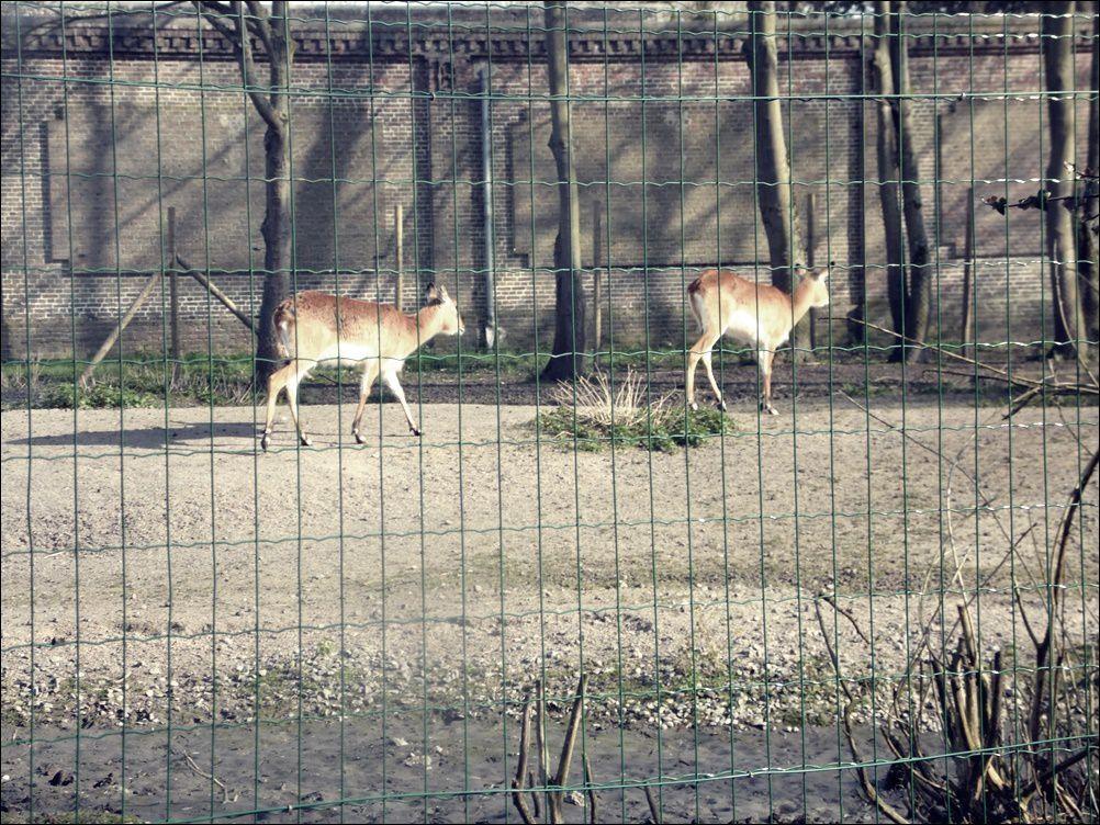 Sortie au Zoo en famille.