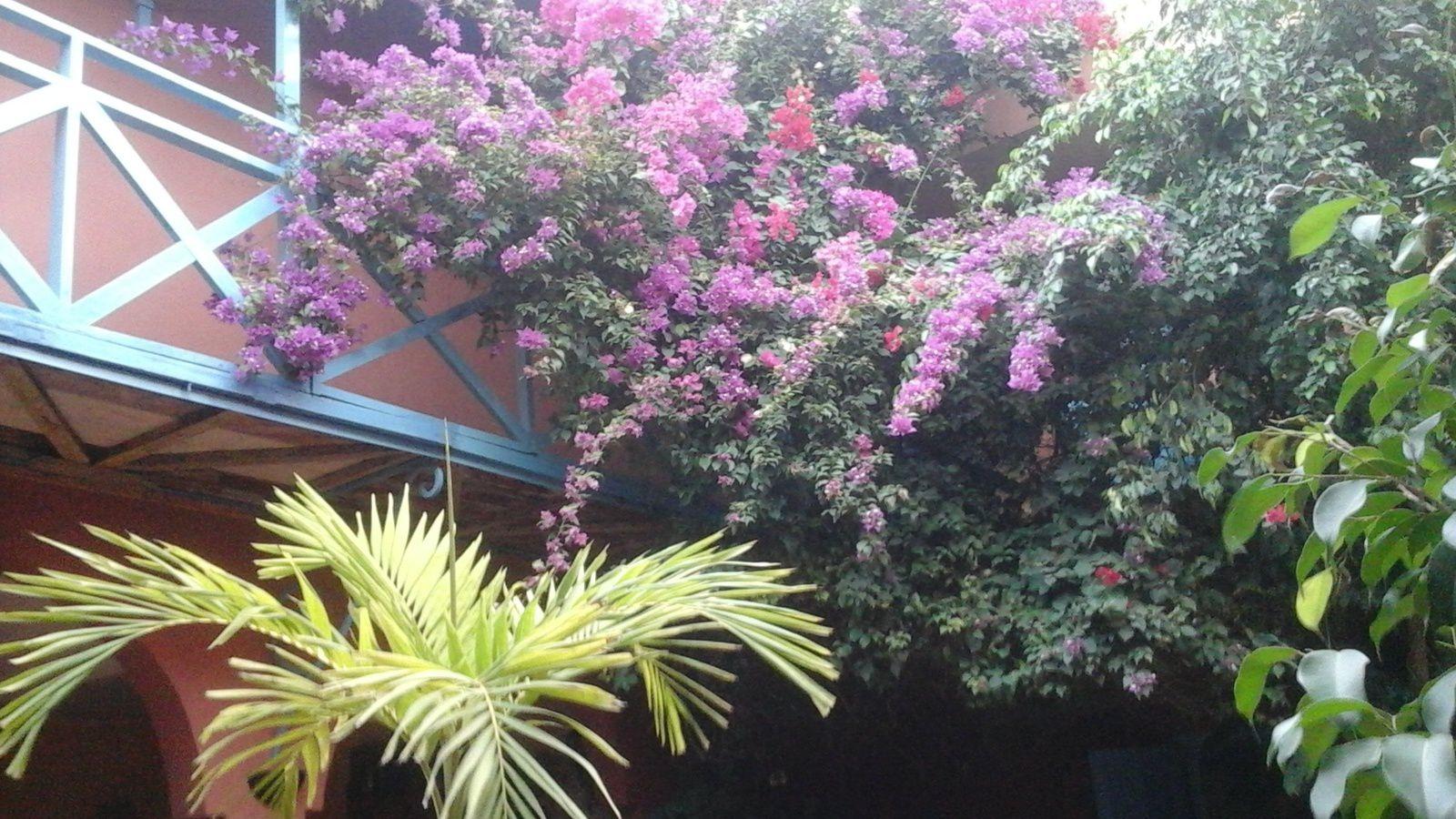 Où dormir à Saint Louis en Sénégal avec la terrasse pour le quiqong journalier?