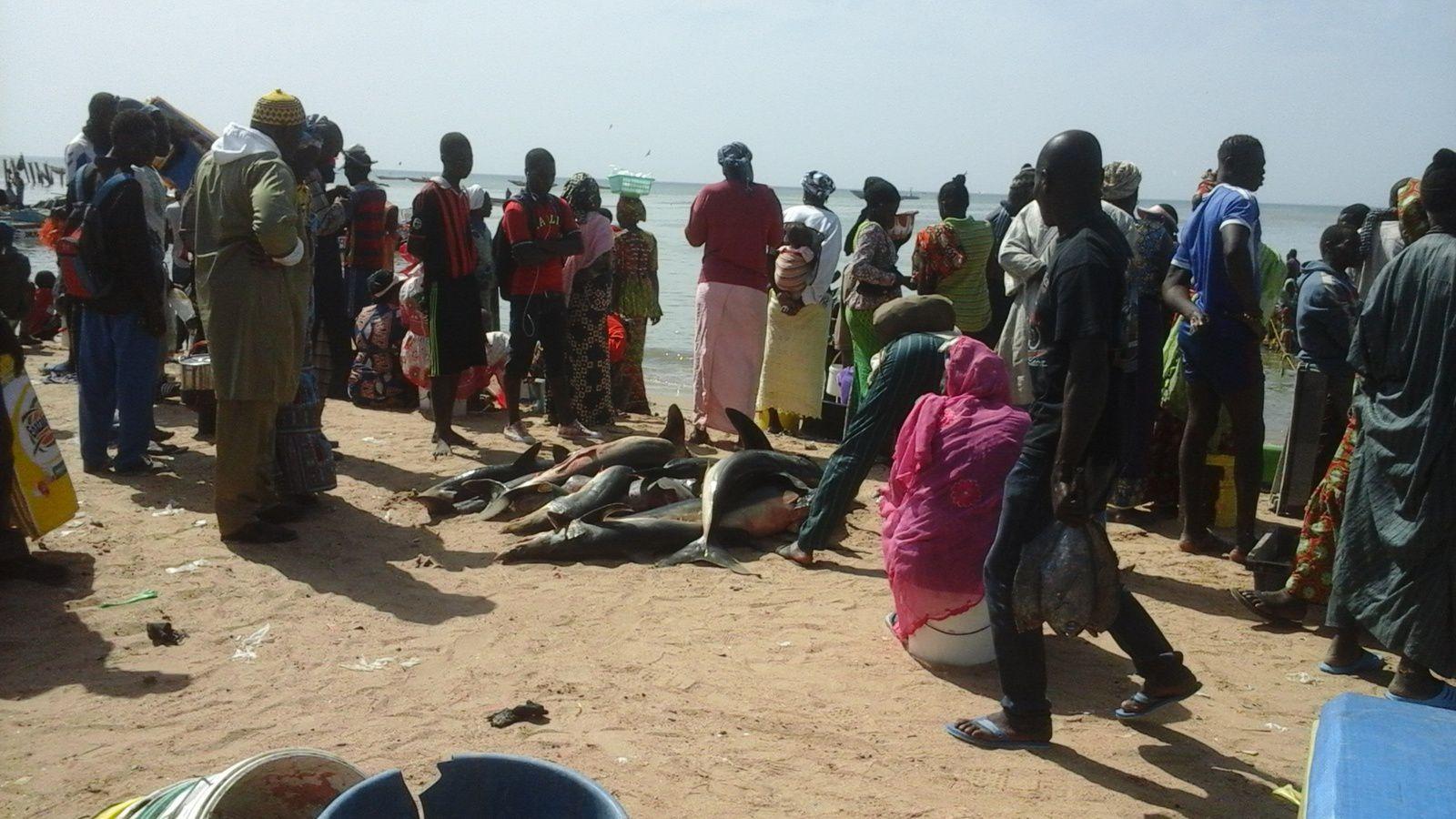 M'Bour : &quot&#x3B;la petite côte&quot&#x3B; au Sénégal