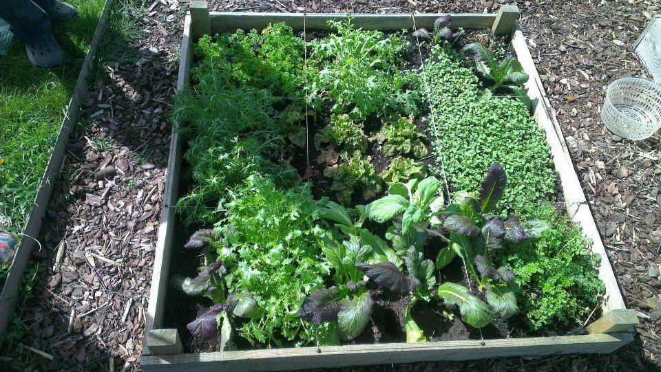 Salade &quot&#x3B;Grand-mère&quot&#x3B;