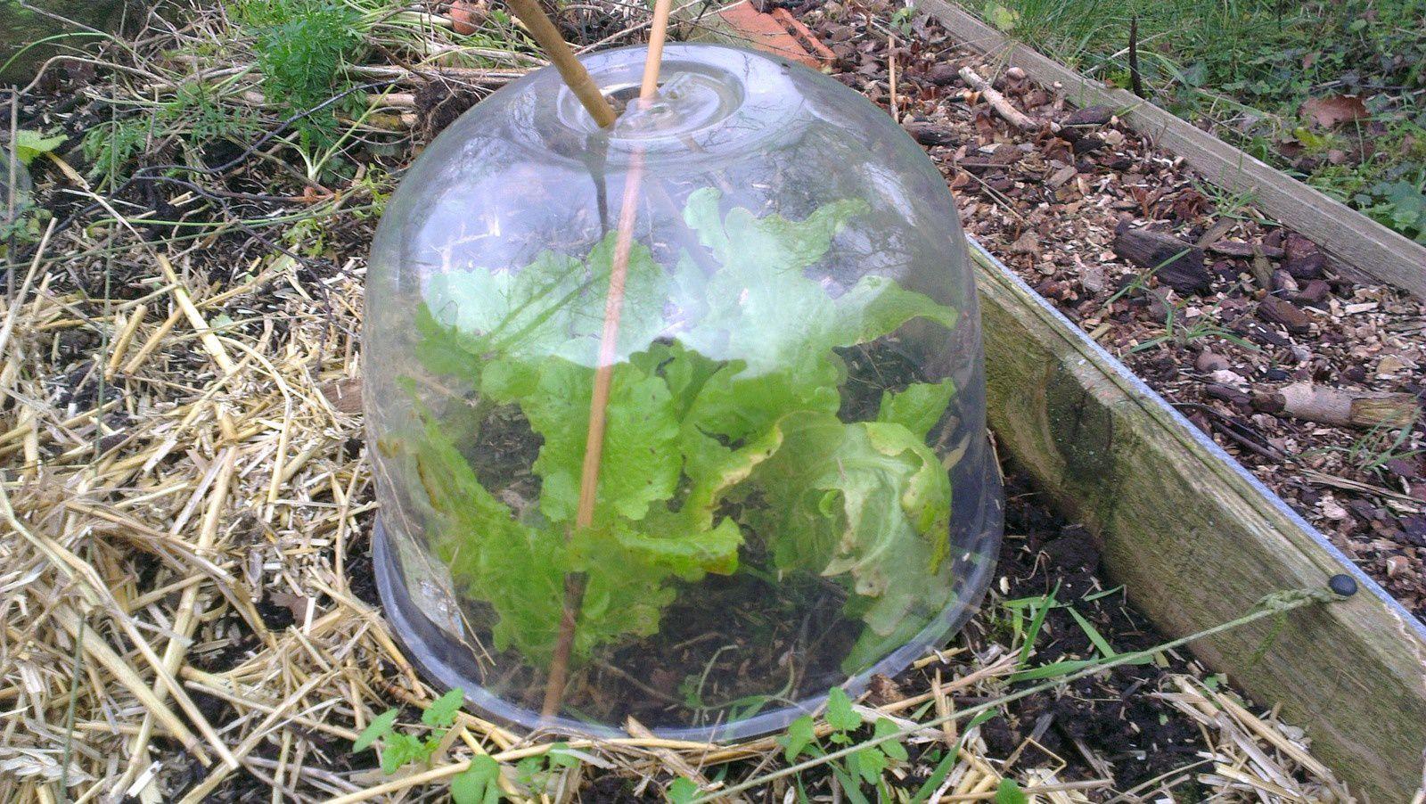 permaculture en pratique