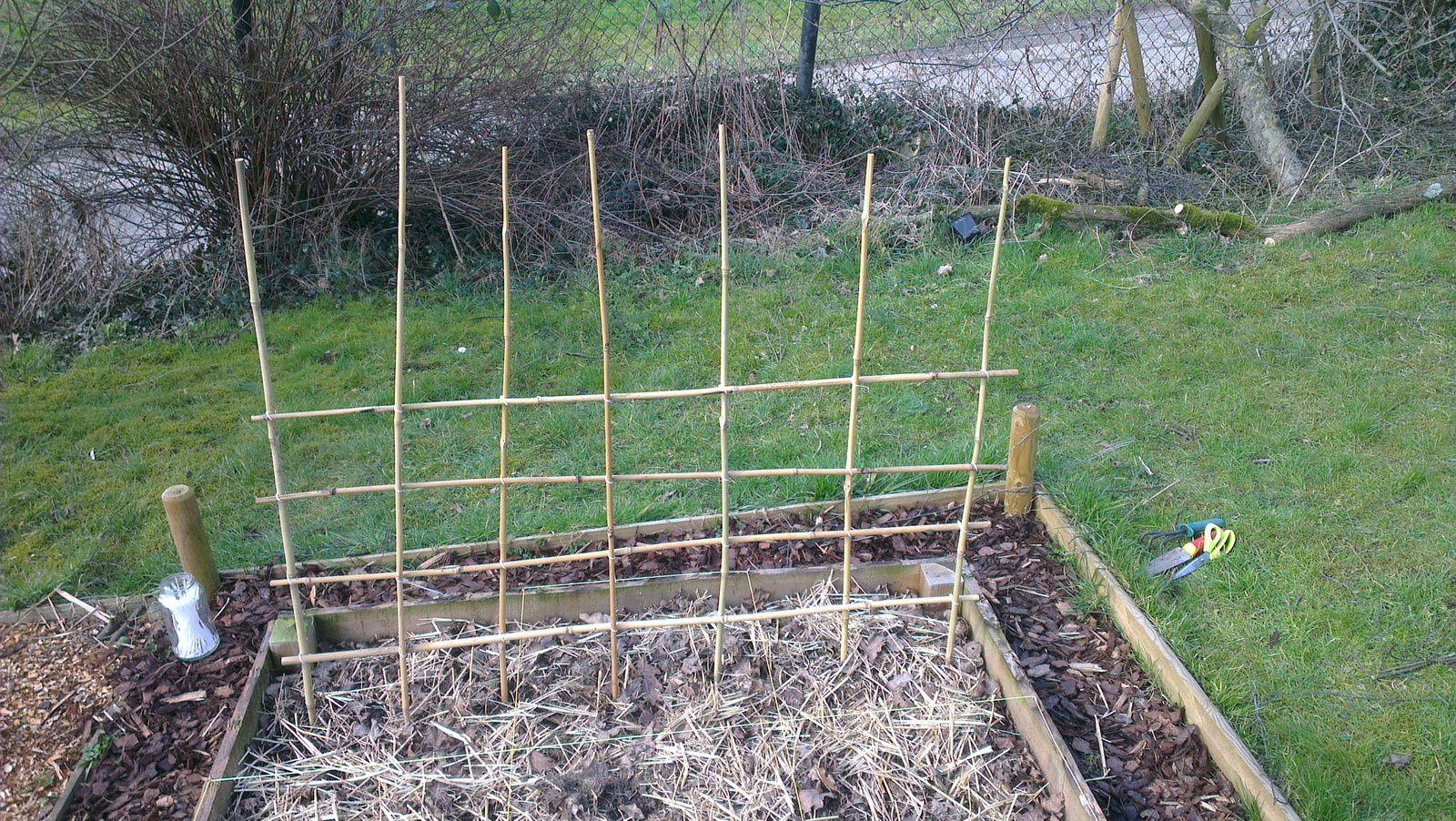 Planter palisser les pois nains l 39 oasis de vignamont - Planter les petit pois ...
