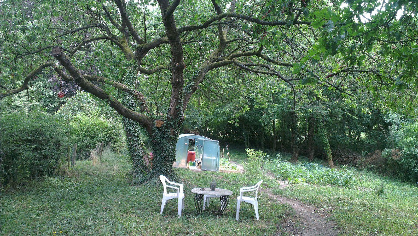"""ma serre dans son environnement avec un petit """"pré fleuri"""" devant et un petit champ de patates"""